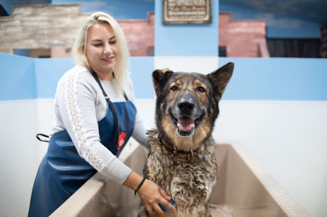 Chelsea & German Shepherd Smiling.jpg