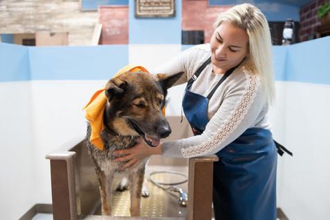 Chelsea Drying Dog.jpg