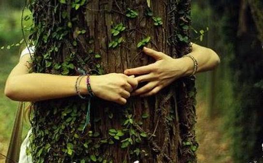 soñar-con-árbol-o-abrazo-a-un-árbol.jpg
