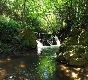 Montseny_Gorg-de-la-Plana1.jpg