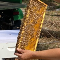 Let It Bee: HSGC Creates Honeybee Colonies