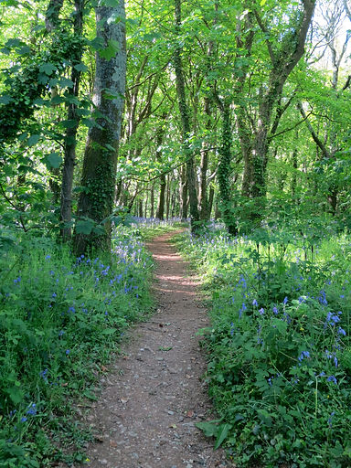 another-woodland-path.jpg