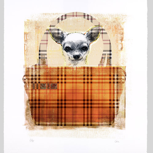 Burberry Dog by Shannan Gia