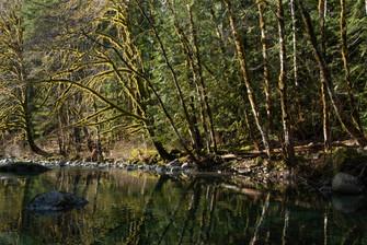 River Vancouver Island Port Renfrew Lake Cowichan