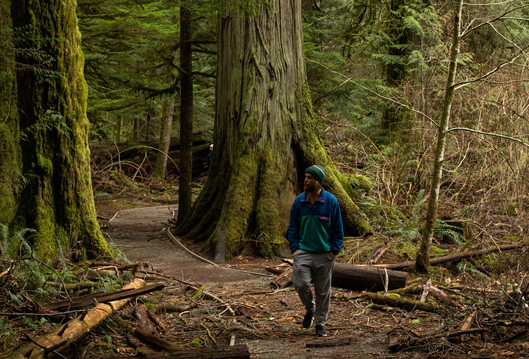 Cathedral Grove Forest Walk