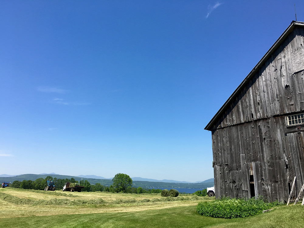 NEK Vermont In a Nutshell | Buy CBD oil | Organic Hemp Seeds | NEK Roots