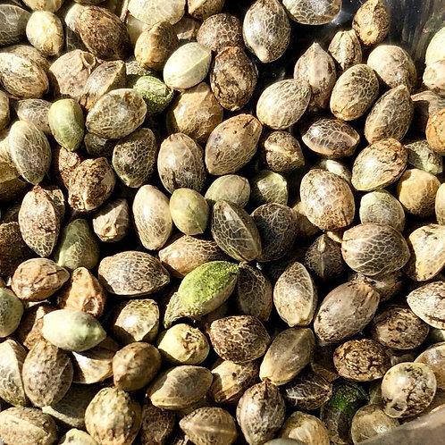 BaOx CBD Organic Hemp Seeds