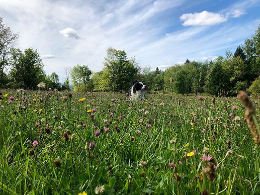 Vermont Organic CBD | NEK Vermont | Buy CBD Oil | Hemp Seeds