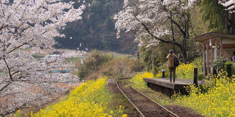 小湊鉄道菜の花・桜撮影ワークショップ4月1日