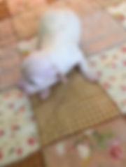 female puppy 1.jpg