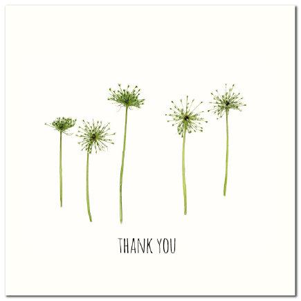 Thankyou Seedheads