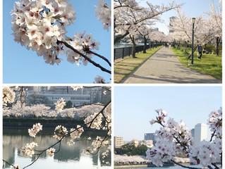 仙台藤崎のセレクの店内は春らしさがいっぱいです!!