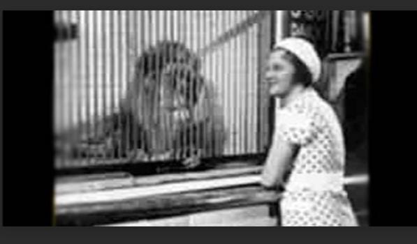 Albert lion3.png