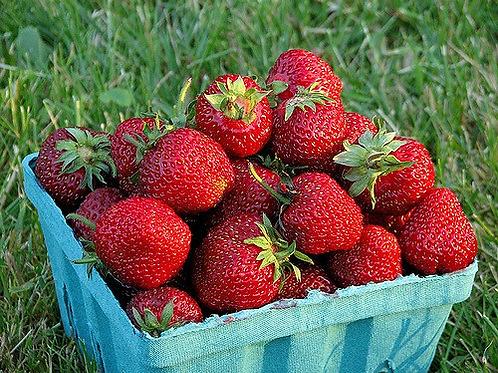 Strawberry Qt.