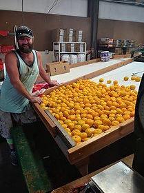 Gordy ramping up mandarins