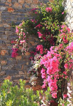Blumenpracht, Kreta