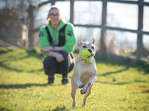 dog-chases-ball-birmingham-dogs-trust-sm
