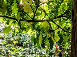 Høst/Harvest your fruits
