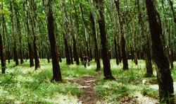 wideshot_plantation.jpg