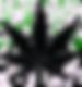 Cannabis-Pot-Leaf_edited.png