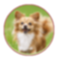 Bil-Jac Dog