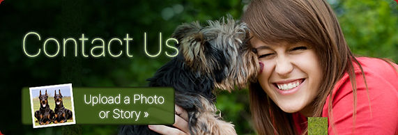 Upload your dog to our Facebook