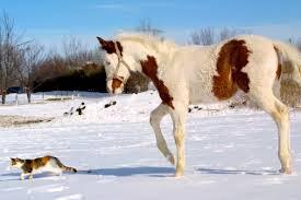 Pony in Snow.jpg