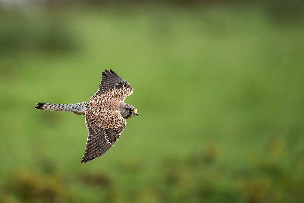 The hawk's flight teaches us flow...