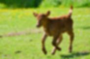 DaisyOpenDya - Copy.jpg