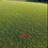 Thumbnail: 5 x Puttovr NTP Proximity Markers
