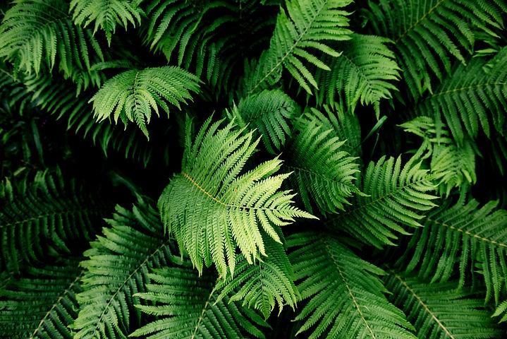 Fern Plant_edited.jpg