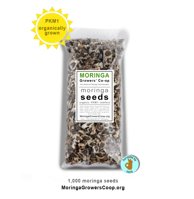 Organic Moringa Seeds from the Moringa Growers' Co-op