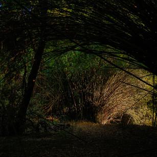 Passeio no bambuzal