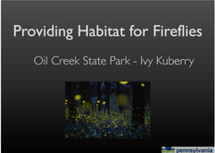 Providing Habitat for Fireflies Screenshot