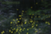 Synchro photo.jpg