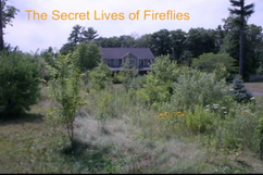 "Don Salvatore's ""The Secret Lives of Fireflies"""