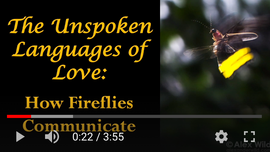 The Unspoke Languages of Love