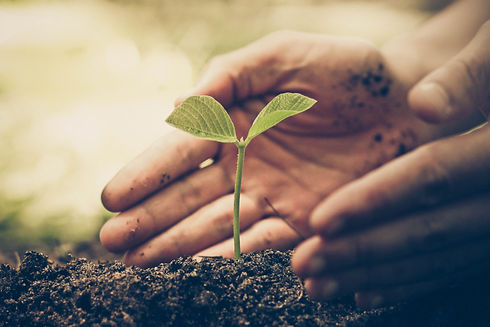 Mão cultivando uma semente
