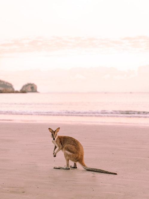 Peachy Kangaroo