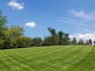 Dyamax Landscaping.jpg
