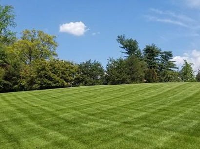Lawn Cut