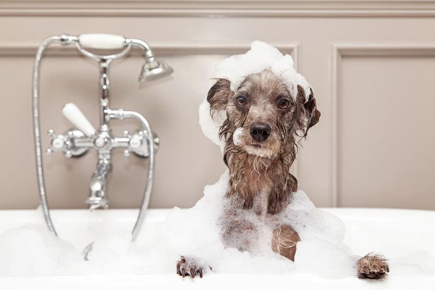 Forfait hygiène Petit chien