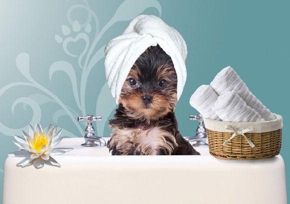 Forfait hygiène Moyen chien