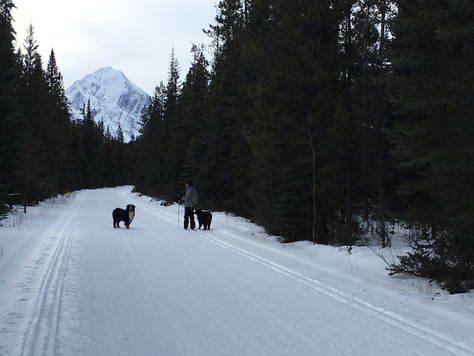 Cross Country Skiing in Jasper with Vito and Yardena