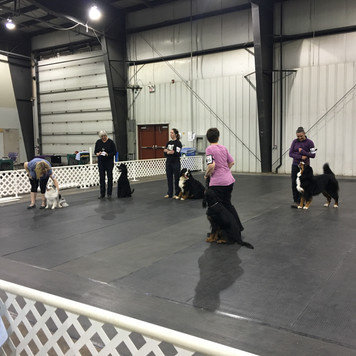 Vito and all the other Novice Obedience Dogs with qualifying scores
