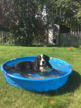 Shelby basking in the pool