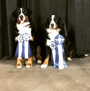 Shelby and Yardena getting their Rally Obedience Excellent Titles Fall 2016