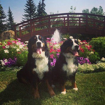 Yardena and Shelby at the Spruce Meadows