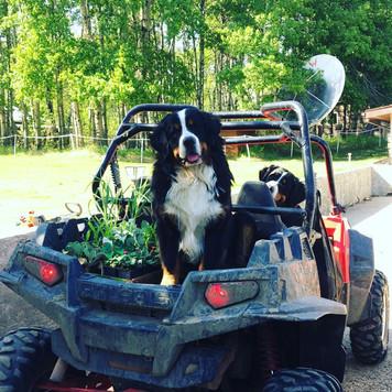 Vito and Shelby ready for a razor ride
