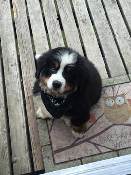 Vito - 12 weeks